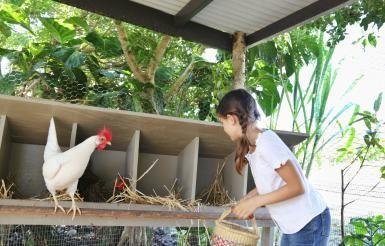 Cómo hacer una granja de cero desperdicios en tu traspatio