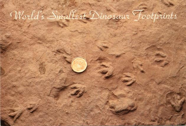 Postcard displaying the world's smallest dinosaur footprints found near Parrsboro, Nova Scotia. Photography by Eldon George, c. 2010.