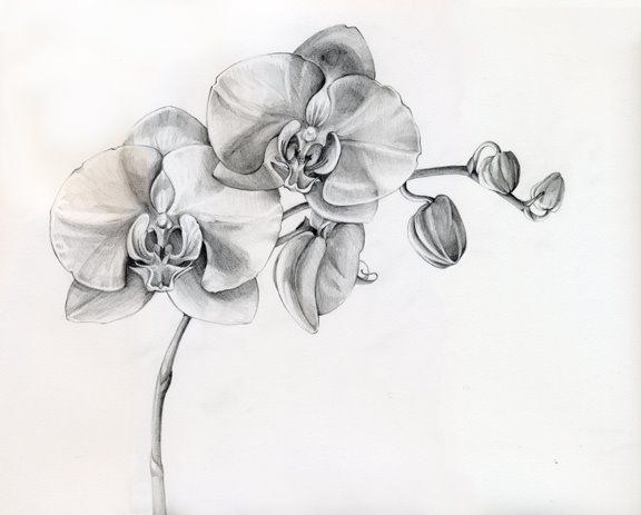 Black And White Orchid Tattoos Designs orchid tattoo- because aquarius is my moon sign and it's flower is orchids and I love orchids