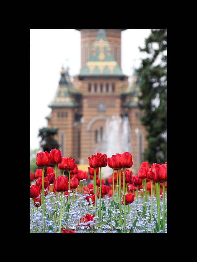 © Timisoara, Rumania