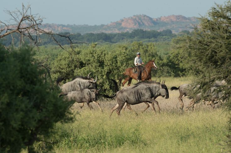 Feel the wind in your hair on a wilderness horse trail in the Waterberg or Tuli region in neighbouring Botswana #mojaleriver #horizonhorseback #horsetrails #lifeisajourney #rustichorsetrails