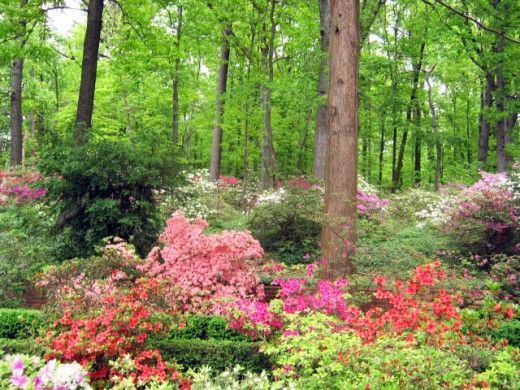 gardens for shady areas | Shade Loving Flowering Plants for a Woodland Garden or Shady Area