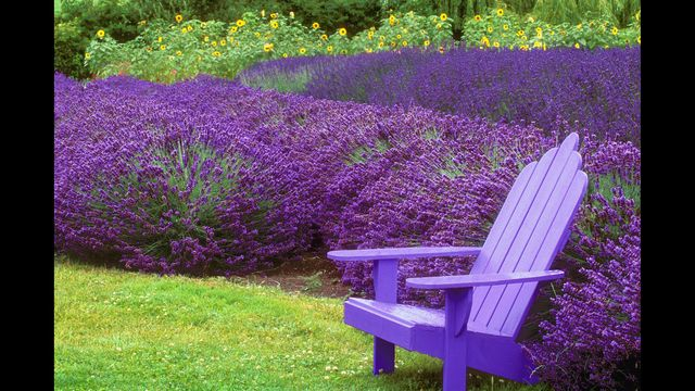 Summer is almost here, and you'll want to spend more time in your backyards and gardens.