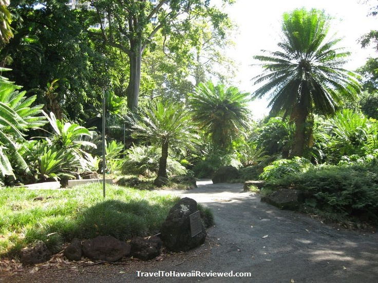 17 best images about hawaii on pinterest surf hawaii and north shore for Foster botanical garden honolulu