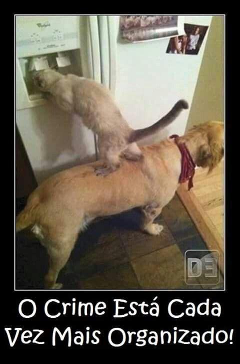 Kkkkk gato com cachorro