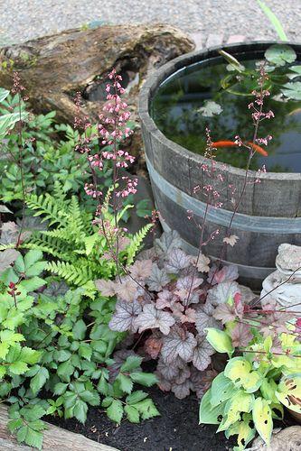 Barrel pond gardening pinterest in the corner fish for Corner fish pond