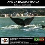 AGTA – Turismo de Observação de Baleias (Whalewatching) | Lista Laguna