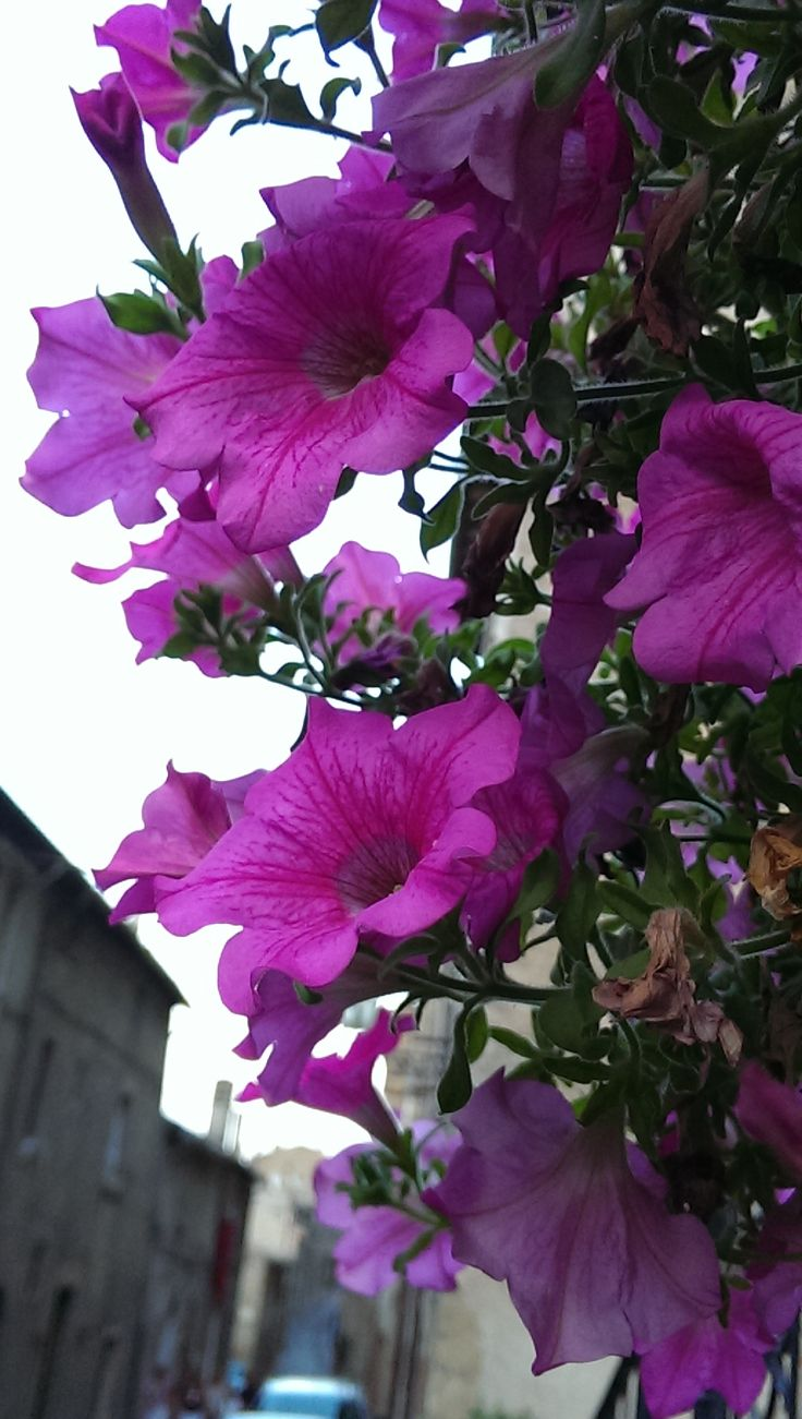 Flowers in an alley