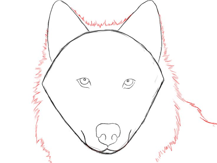 7 best wolf drawings images on pinterest how to draw wolf wolf how to draw a wolf ccuart Gallery