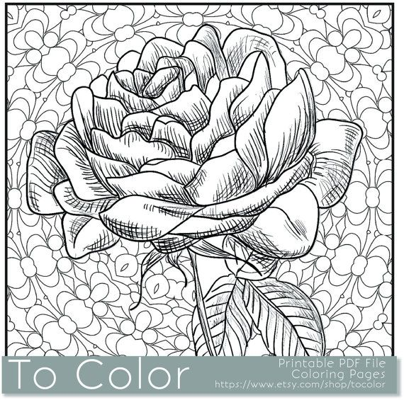 printable rose coloring page for adults pdf jpg instant by tocolor davlin publishing - Rose Coloring Pages