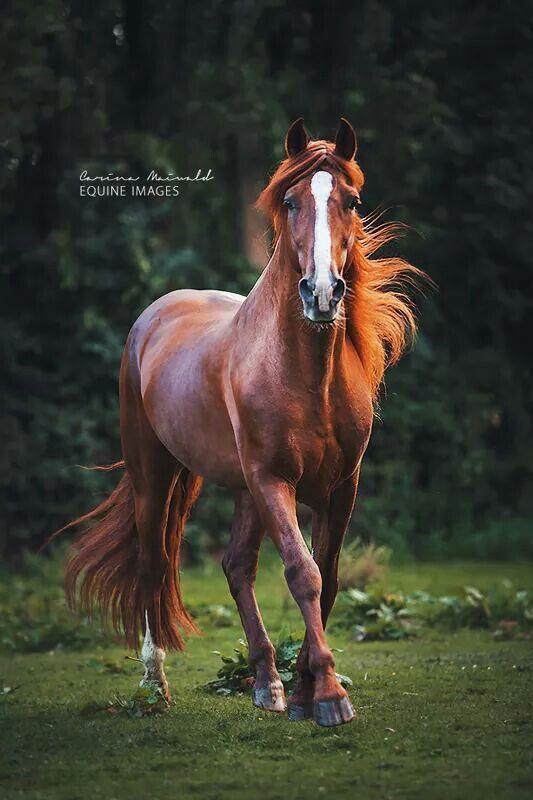 Stunning horse photo