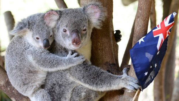 On Australia Day, many children goes to the Zoo and watch animals.
