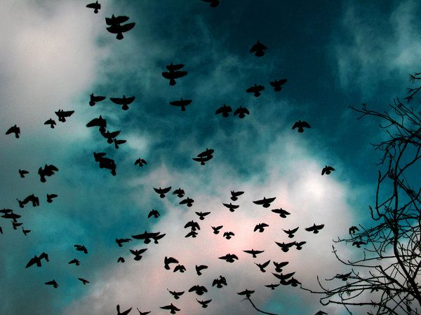 Next thing i know was the wind and the smell of the autumn. Like the birds in a flock, my fears were running away  to a place where they can continue to live.