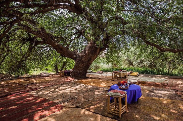 Picnic under the Pistachio tree? Kasbah Beldi #BoSoukGardens