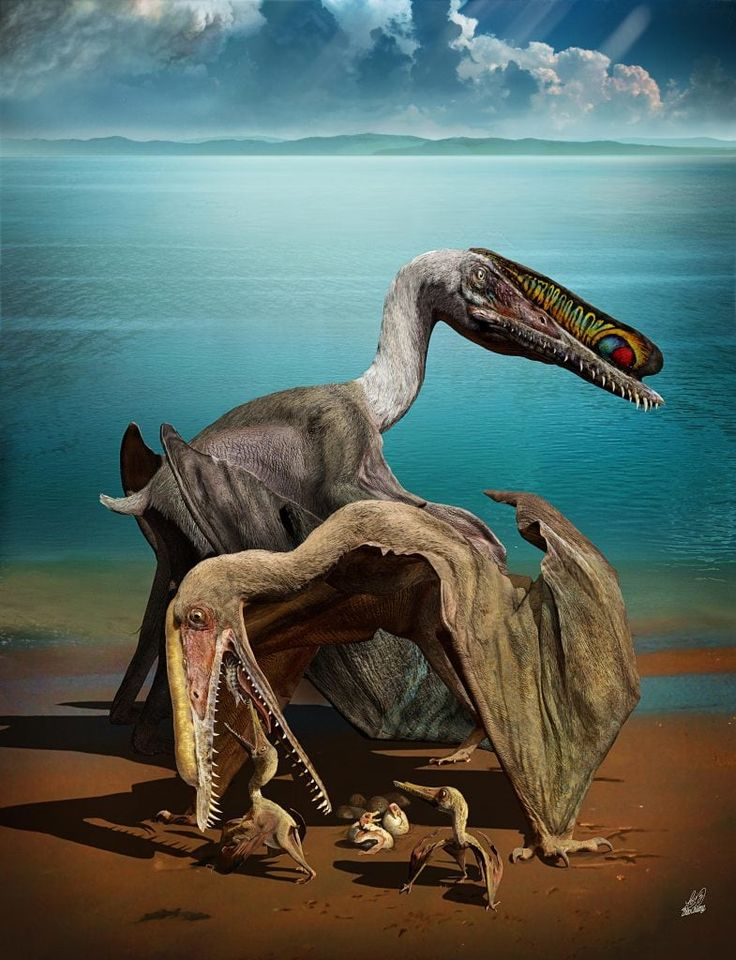 Scientists just discovered the mother lode of pterosaur eggs, and they are over the moon
