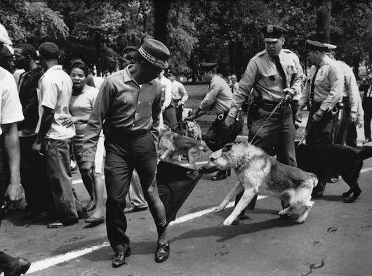 """Charles Moore. Demonstrators and police dogs (Демонстранты и полицейские собаки). Birmingham Protests,1963. 3 photo. """"Моя карьера была на 100% отличается от того, что я намеревался делать. Я думал фотографировать природу и пейзажи... http://udavich.blogspot.com/2016/11/charles-moore.html"""