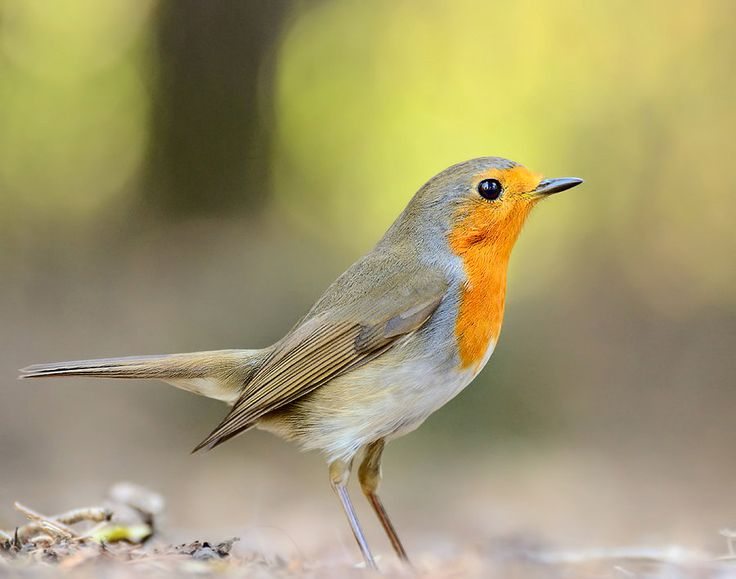 Robin by corsuse on DeviantArt