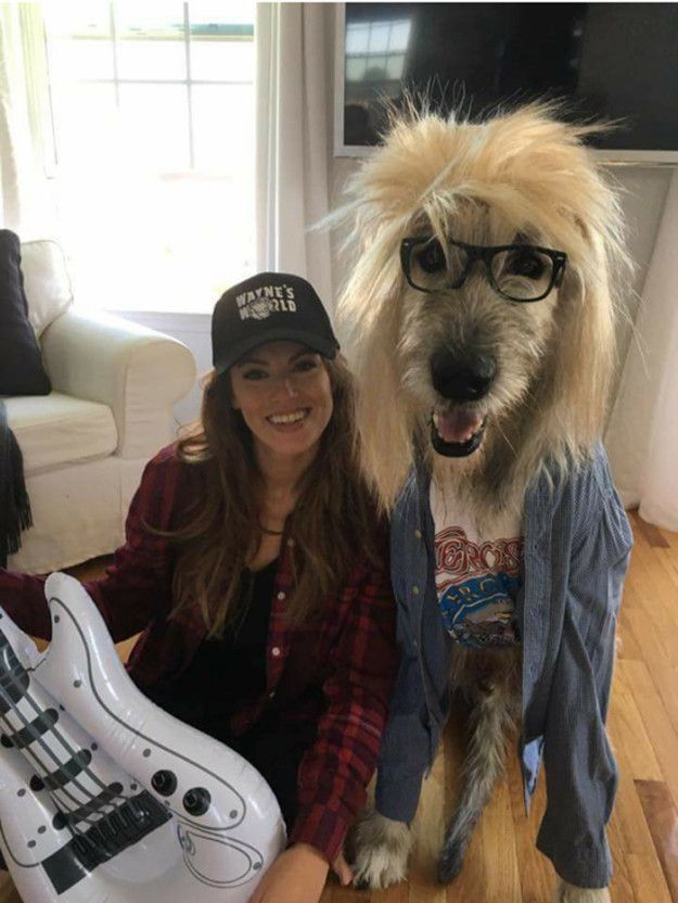 Anyone who has ever attempted a couples costume knows just how difficult they can be to pull off. However, that wasn't the case for Kate Banaszak and her dog, Kellan the Irish wolfhound, who dressed up as Wayne and Garth from Wayne's World to create this perfectly magnificent costume. | This Woman And Her Dog Deserve All Of The Best Halloween Costume Awards