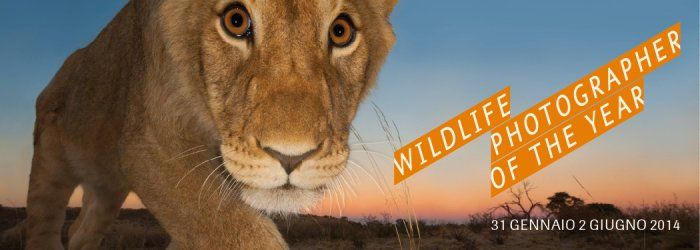 Forte di Bard - sale delle Cantine: Wildlife Photographer of the Year | www.fortedibard.it