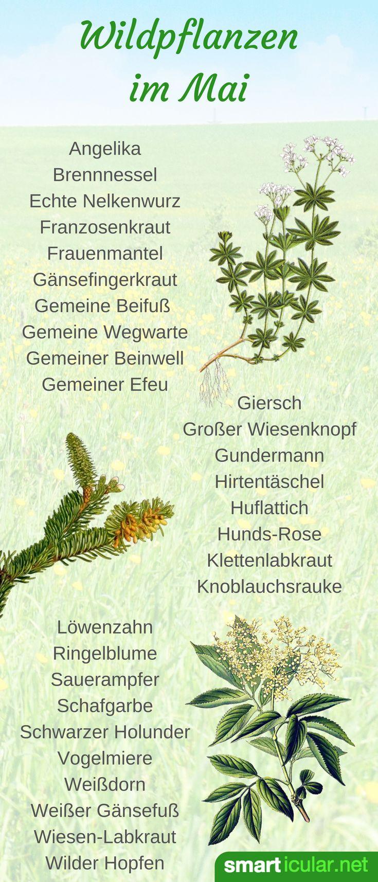 Im Mai sprießen die Wildkräuter überall und das Sammlerherz geht auf. Welche Pflanzen du jetzt findest und wie du sie verwendest, erfährst du hier.