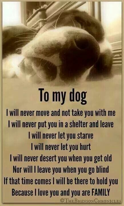 To my dogs