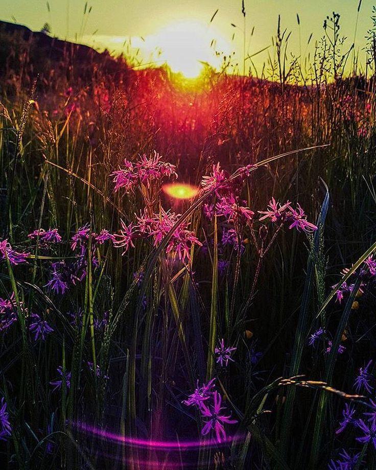 """Virágos naplemente"" #sunset #flowery #field #nature #naturelover #flowers #summer #colors #erdély #mobilphotography : @peter.kzi -------- #boostingromania #promovezromania #ig_romania #transylvania #romaniamagica #szeklerland #vivid #instamagazine_ #theweekoninstagram #ig_europe #lake #vacation #explore #travel #dicover #passionpassport #bbctravel #beautifulmatters #justgoshoot #visualsoflife"