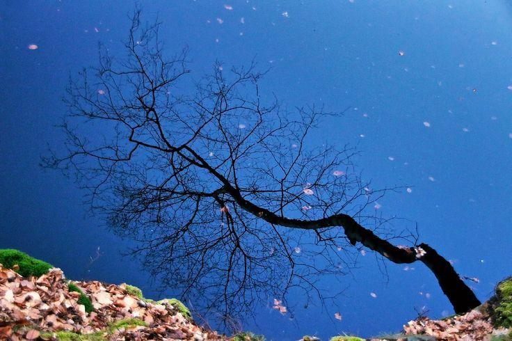 surreal reflection