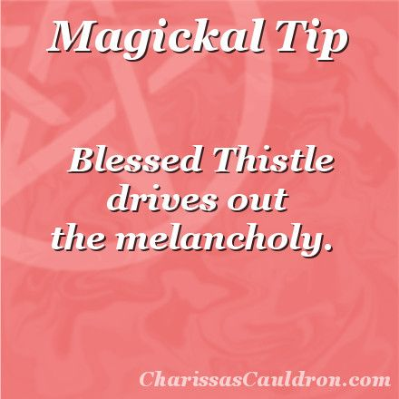 Magickal Tip - The Blessings of Blessed Thistle – Charissa's Cauldron