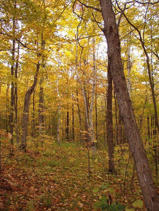 Trent University :: Trent Nature Areas - trails etc