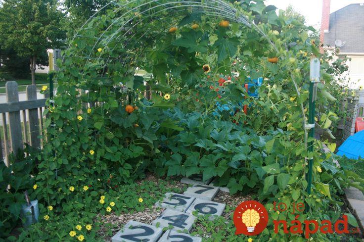 Ak pestujete tekvice alebo cukety viete, že takmer vždy sa ťahajú po zemi a ak máte menší priestor na pestovanie, rýchlo sa rozrastú a zaberú miesto na pestovanie iných plodín.