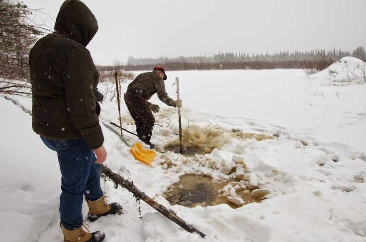 Setting A Snare Set for Beaver under the Ice