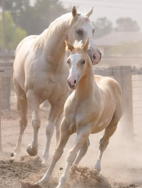 AQHA and APHA horses for sale, Hay Good Paints