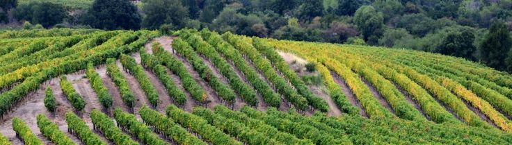 Maule Valley: multiplicity of origins, microclimates and soils  http://www.conchaytoro.com/winemakers-journal/maule-valley-multiplicity-of-origins-microclimates-and-soils/