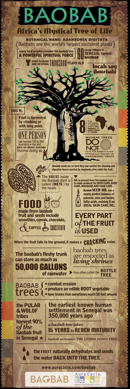 Lovely Infographic from www.Auracacia.com about the Baobab tree in Senegal