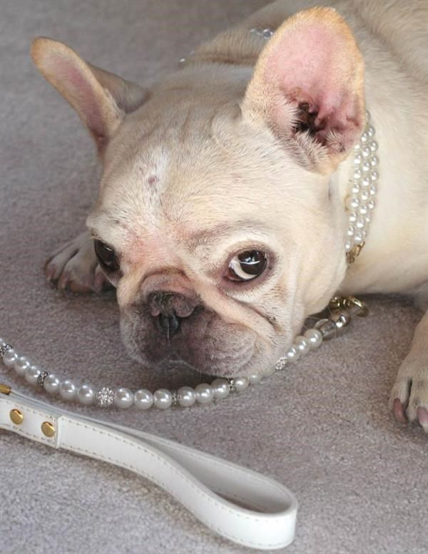 Victorian Trading Co Opulent Pearl Pet Dog Collar Lg Victoriantradingco Pet Leash Pets Dog Pearls