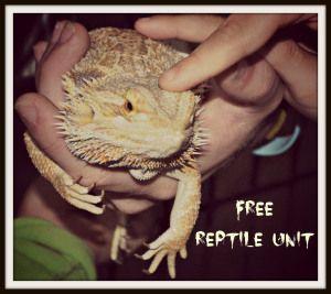 Preschool – Lower Elementary Reptile Unit