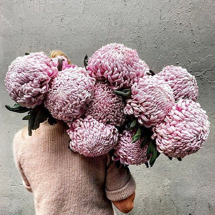 These are giant chrysanthemums. That's all. ( @skinny_wolf) by elleindiaofficial