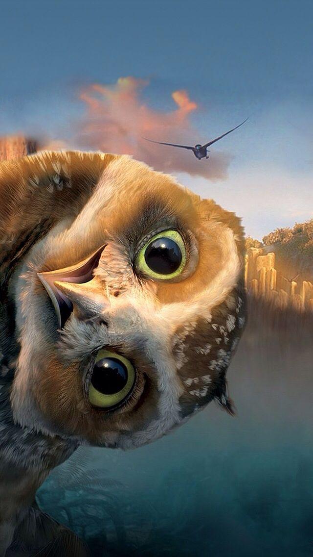 Die Augen dieser Eule blicken mich in eine neue Welt!