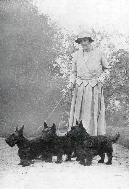 Scottish terriers, 1934 - the Aberdeens sure had a different look than today's Scotties.