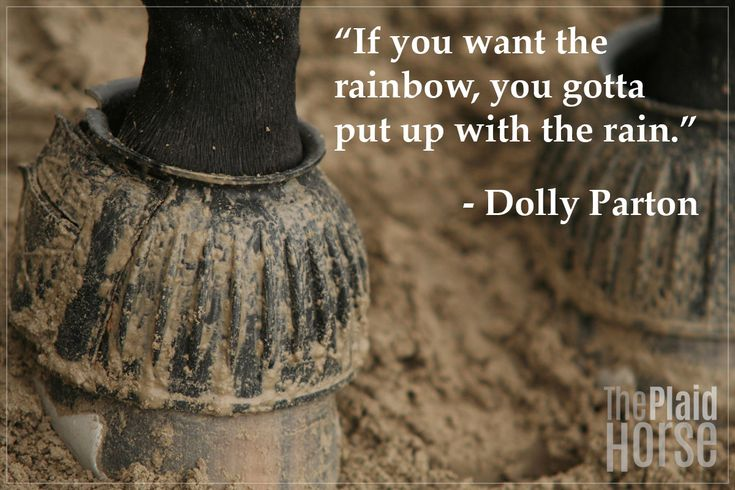 20 Motivational Quotes to Use on the Barn | The Plaid Horse Journal