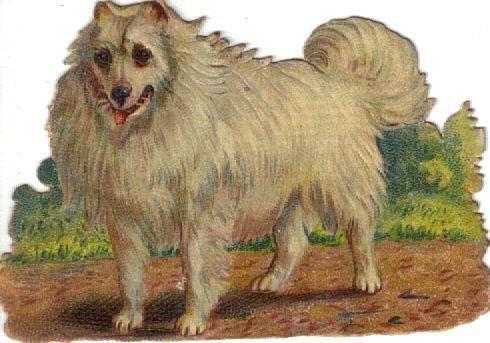 Victorian Die Cut Scrap Arctic Eskimo Dog c1880