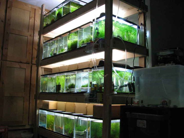 Fish tank 2x4 racks properly constructed wooden shelves for Multiple betta fish tank