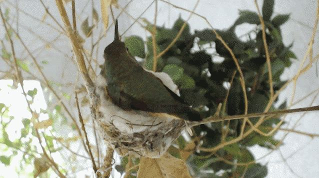 The Bella Hummingbird Cam | 14 Animal Cams That Are Better Than TV
