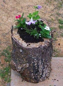 Ogrodowa donica z pnia drzewa wymaga pracy i czasu, ale efekt jest wart wysiłku. Zobacz, jak ją zrobić: http://www.povoli.pl/praktycznie/donice-ogrodowe-letni-hit-diy #DIY