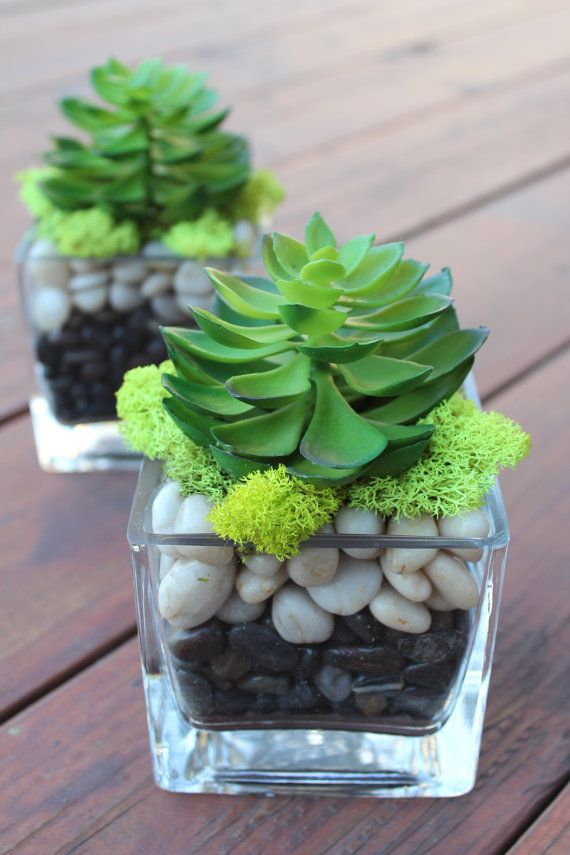 artificial succulent in a square glass vase 2 pcs inspiration possibly use a real succulent. Black Bedroom Furniture Sets. Home Design Ideas