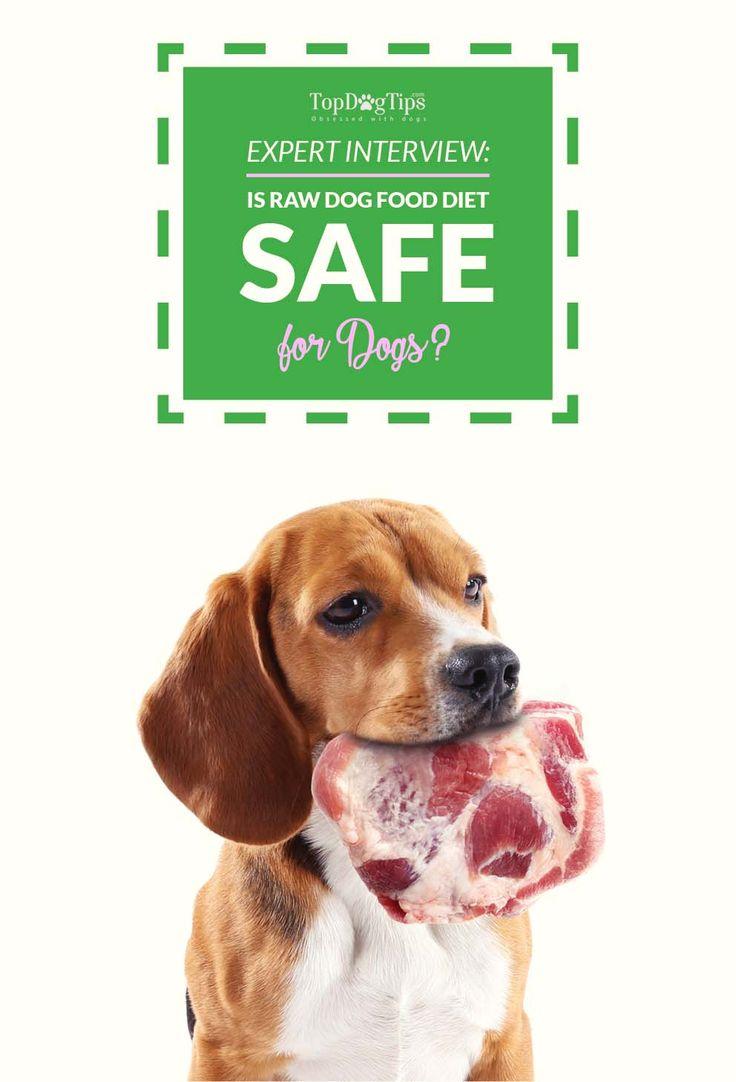 Canned Dog Food For Dogs With Kidney Problems