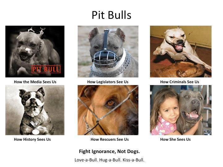 I <3 Pit Bull!!!