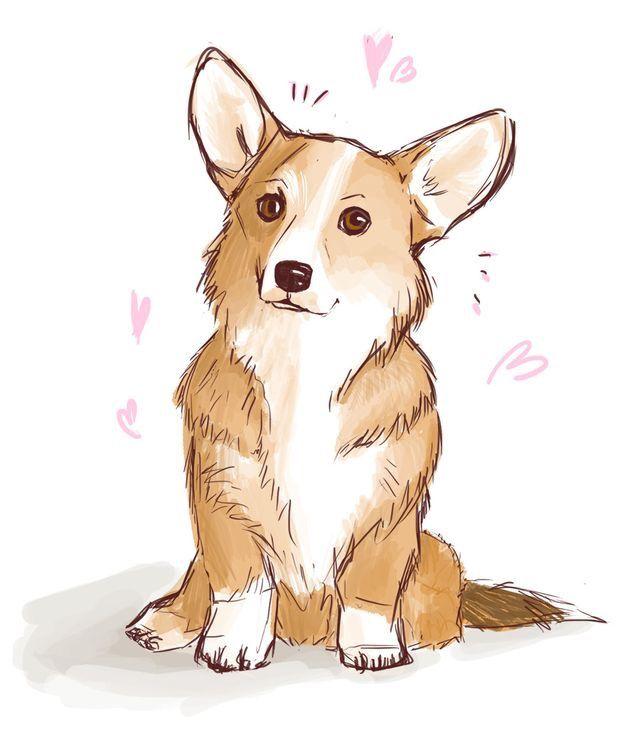 Собака породы корги картинки для срисовки