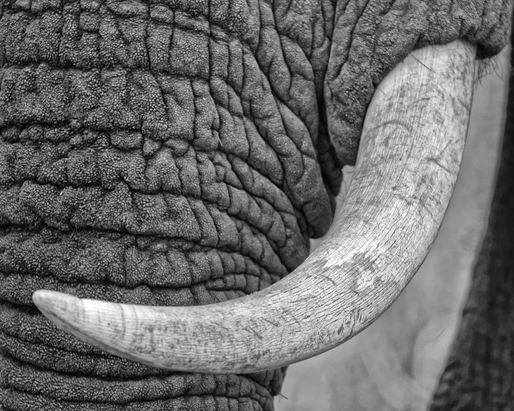 Ivory ONLY looks good on an elephant!!