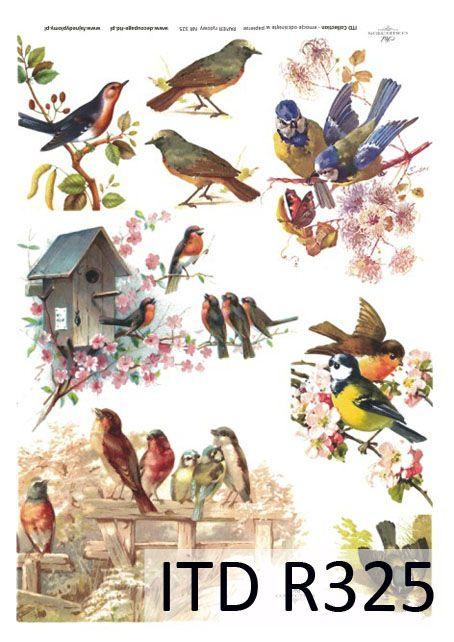 """Рисовая бумага """"Разноцветные птицы"""" А4   Мастерица   Декупаж   Декупажные карты и салфетки   Рисовая бумага"""